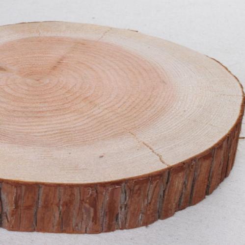 木の年輪板 杉 樹皮つき Mサイズ(21-25cm)